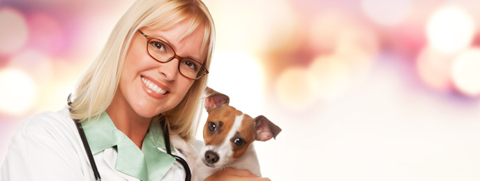 Careers Available to You Once You Graduate from Online Veterinary Assistant Programs